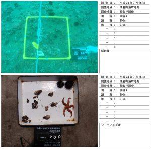 藻場調査(底生生物)